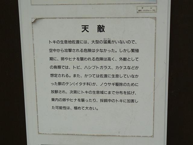 P1120184.jpg